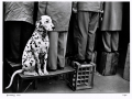 Walter Vogel, Dalmatian… Not interested in football, Düsseldorf 1956